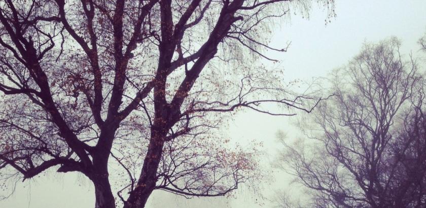 bosque otoño niebla